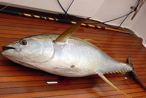 Рыбалка в группе на Рача Яй и Рача Ной