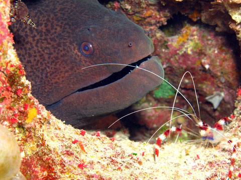 дайв-сайт плавник акулы (shark fin reef)