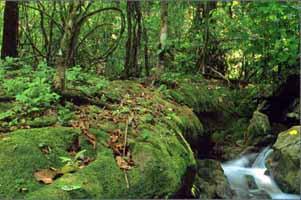 Национальный парк Као Сок и озеро Чео Лан