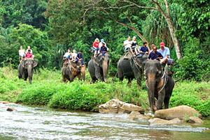 Рафтинг, слоны, квадрациклы ATV