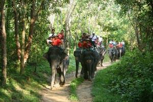 Катание на слонах. Квадрациклы (ATV)