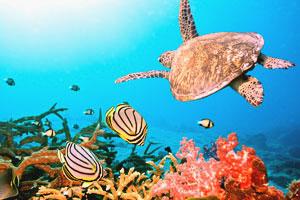 Морская черепаха на Симиланских островах