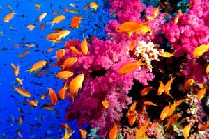 Коралловый риф на Симиланских островах